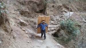 In Nepal, many districts have no paved roads and all materials are carried by pack animal.  This guy is carrying ~ 50 pieces of lumber for a construction project.